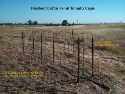 Making A Tomato Cage From Two Cattle Panels And Some T