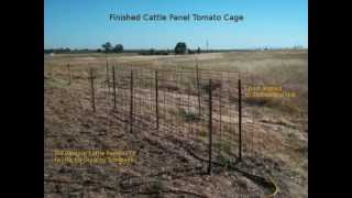 Making A Tomato Cage From Two Cattle Panels And Some T-posts