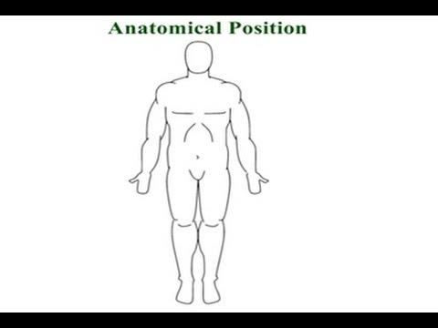 Anatomical Reference Position (Kinesiology, Biomechanics) - YouTube - anatomical position