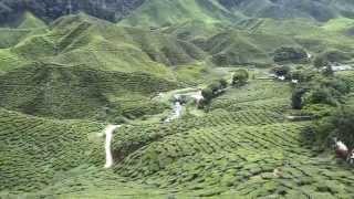 مزرعة شاي جميلة في ماليزيا - Bharat Tea Plantation