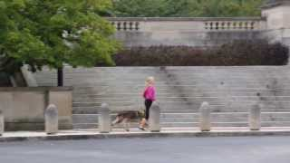 Jai And Setos Jog Security Obedience Trained German Shepherd Protectiondogsales.com