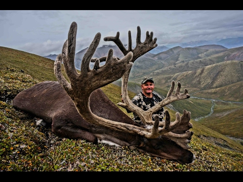 Sheep Hunt Arctic Red River Outfitters 2015