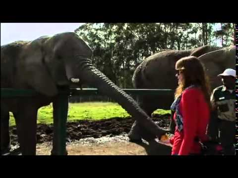 "Checkpoint ""Elephant Abuse"" Episode 9"