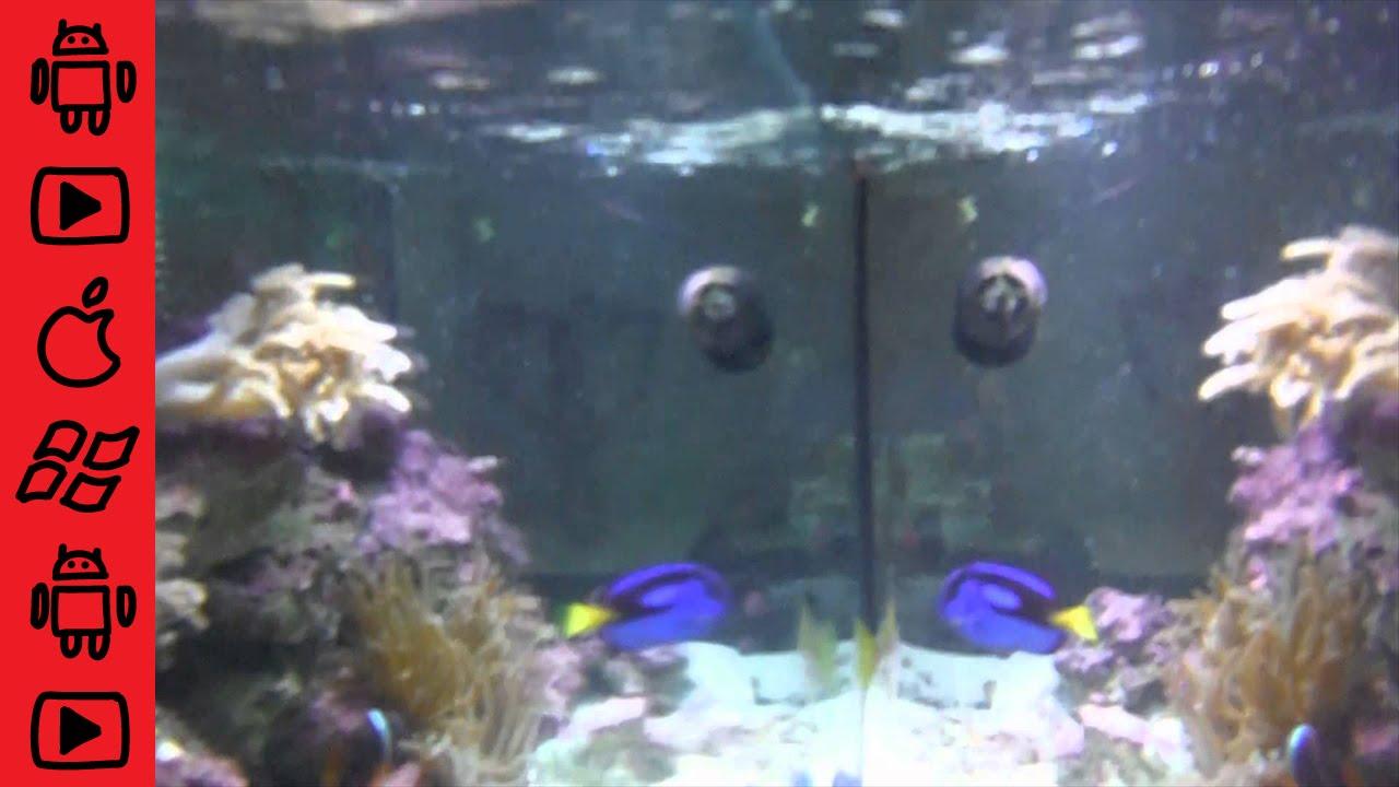 Fujifilm finepix xp60 waterproof camera inside of for Fish tank camera