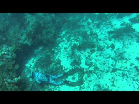 Scuba diving in Florida, Key Largo, Molasses Reef, May 2013.