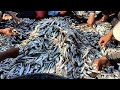 WoW !! Fishermen Fishing Catch a Lot of Fish on Sea - Big Catch hundreds of fish