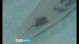 """Житель Иркутска, которого укусил клещ, месяц пролежал в больнице Санкт-Петербурга, """"Вести-Иркутск"""""""