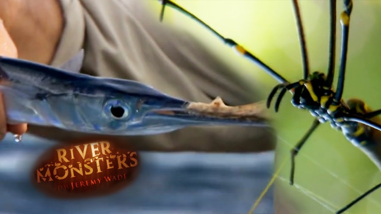 Catching Fish With Only A Spider Web & Kite   SPECIAL EPISODE!    River Monsters