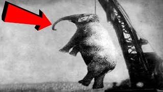 Gambar cover İnsanlar Tarafından İdam Edilen 10 Hayvan