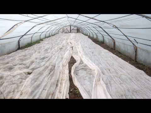 Вопрос: Когда высевать редис в теплице в 2020 году?
