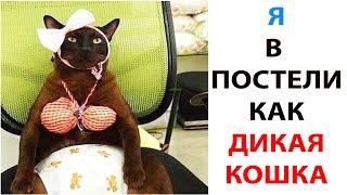 Мемы про Котов за День. Подборка мемов 2 Октября 2021 года #shorts