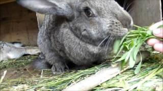 VLOG А вы любите зайчиков (кроликов)? 12.06.2017 Я худею онлайн