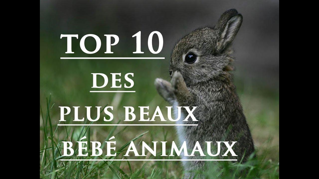 top 10 des plus beaux b b s animaux youtube. Black Bedroom Furniture Sets. Home Design Ideas