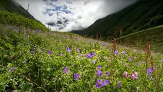 The Valley of Flowers - Ganges - BBC