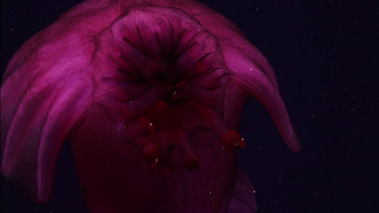 Amazing creatures of the deep seen off SW Australia - LiveScience