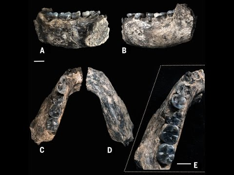 Oldest Human Fossil Discovered, WAY Older Than Previously Thought