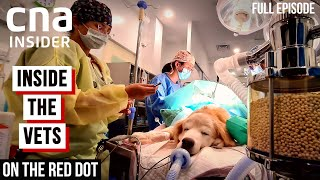 Meet The Vets: Inside The Veterinary | On The Red Dot | At The Vets  Part 1 | Full Episode