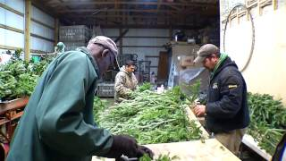 Making Fresh Holiday Wreaths at Woods Farms