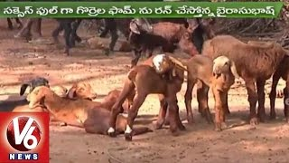 Sheep & Goat Breeding Techniques | Viswa Agrotech | Sagubadi | V6 News