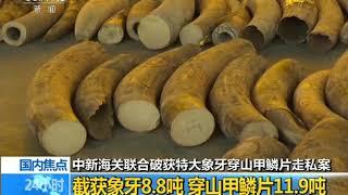 [24小时]中新海关联合破获特大象牙穿山甲鳞片走私案 截获象牙8.8吨 穿山甲鳞片11.9吨| CCTV