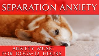 12 Hours of Deep Separation Anxiety Music for Dogs [They will thank you!]