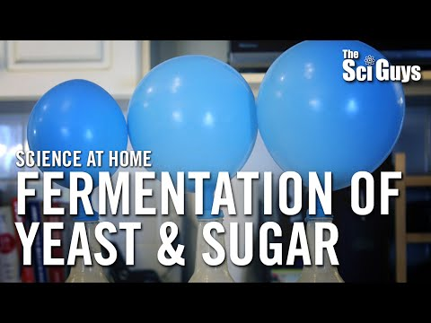 Fermentation of Yeast & Sugar - The Sci Guys: Science at Home
