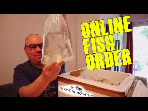 Tropical Fish Unboxing - New Fish Online Delivery!