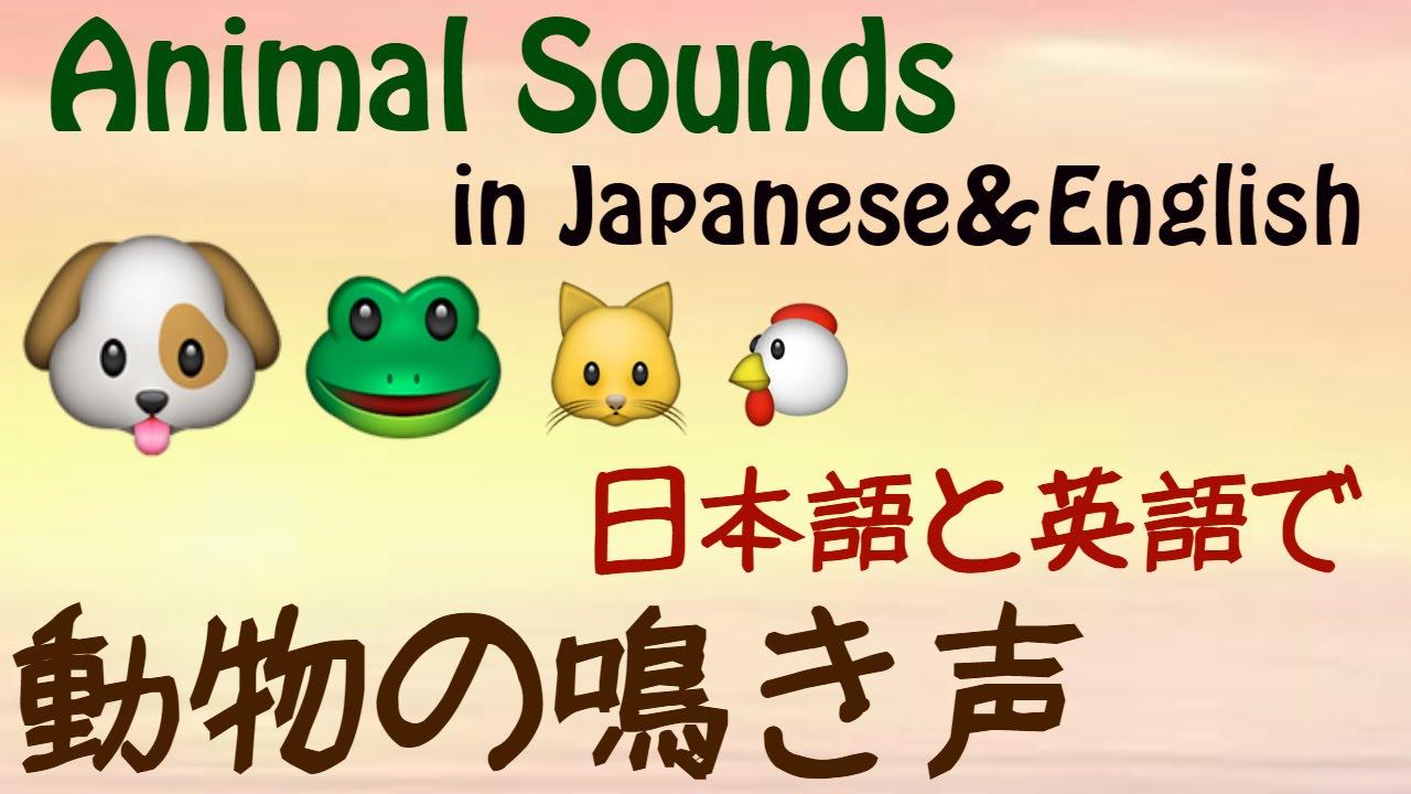 動物 鳴き声 英語