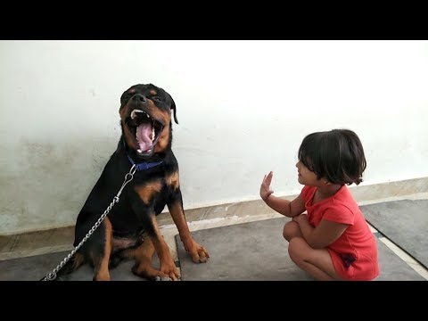 Baby wanna high-five with Rottweiler