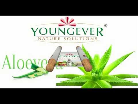 Aloe Vera pulp processing by Farmwealth Biotech and Youngever Nature Solutions Pvt. Limited.