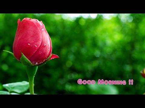 Good morning Beautiful photo's Facebook , Twitter, WhatsApp Video 2018