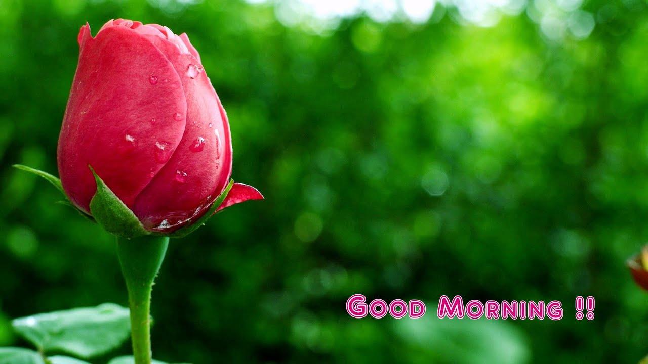 Good Morning Beautiful Photos Facebook Twitter Whatsapp Video