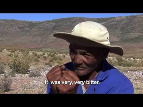 RICHTERSVELD - LIFE IN A HOTSPOT