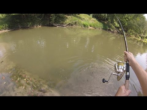 how to catch a turtle with a fishing pole