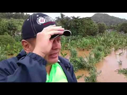 Crecida de río en Añasco afecta cosechas tras huracan Irma