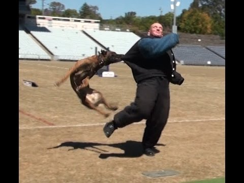 Australian Police Dog Trials 2013