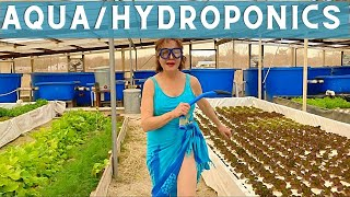 Hydroponic & Aquaponic Gardening for Beginners