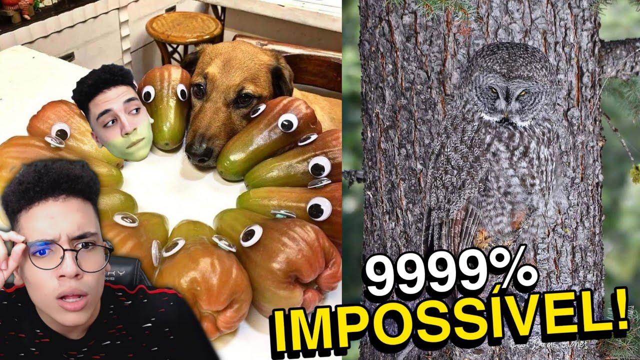 ACHE O ANIMAL (9999% PERDEM)