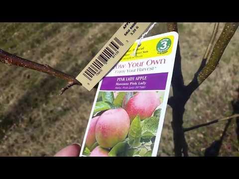 Misty's Pink Lady Apple Tree - Memorialized Loved Pet Tree