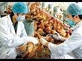 Tiêm 2 loại vacxin cho gà trong cùng một ngày có được không? | Ánh Dương HCMC