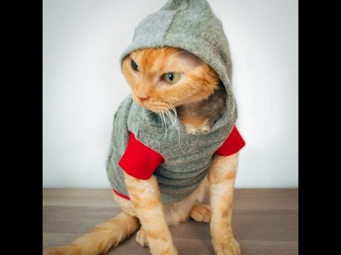 Funny cats refusing to wear clothes and can't walk