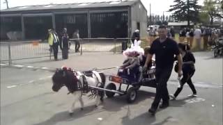 Repeat youtube video London Harness Horse parade 2014