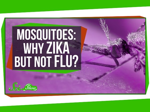 Why Can Mosquitoes Transmit Zika, But Not the Flu?