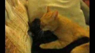 Loiraça enrolada no sofá com um negrão (ATENÇÃO... CENAS ESCALDANTES)