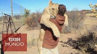 El conmovedor abrazo de una leona al hombre que la rescató