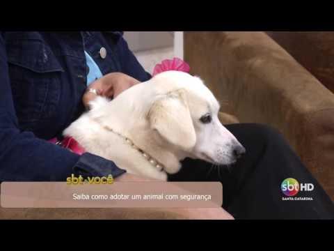 Saiba como adotar um animal com segurança