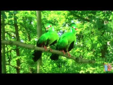 Green Tittifers' Tune