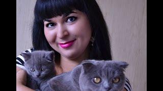 Британские и Шотландские новорожденные котята 7 дней