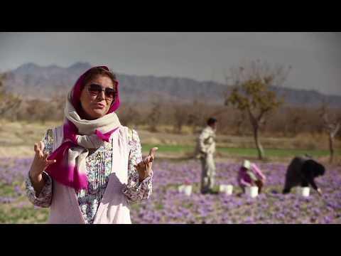 Ariana uncovers the magic of Persian saffron
