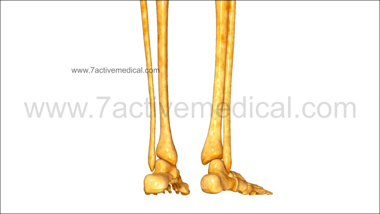 Skeleton Legs Youtube